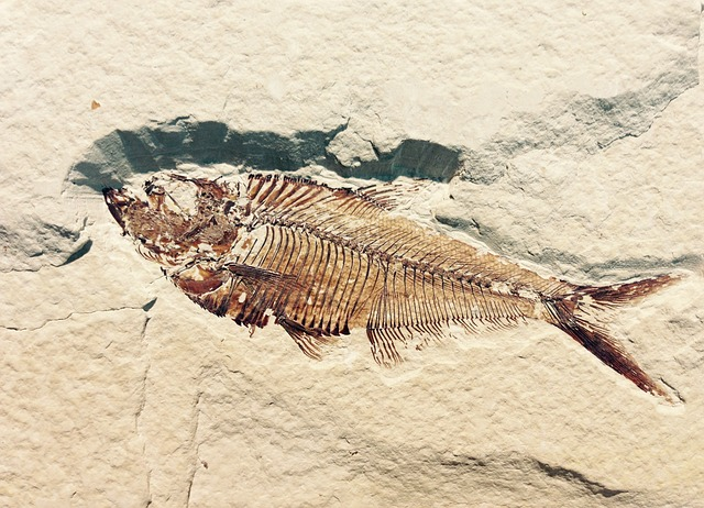 fossil-514980_640